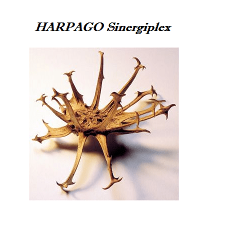 HARPAGO Sinergiplex 60 Capsulas - BioRegime
